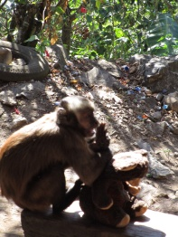 Monkey house, peru